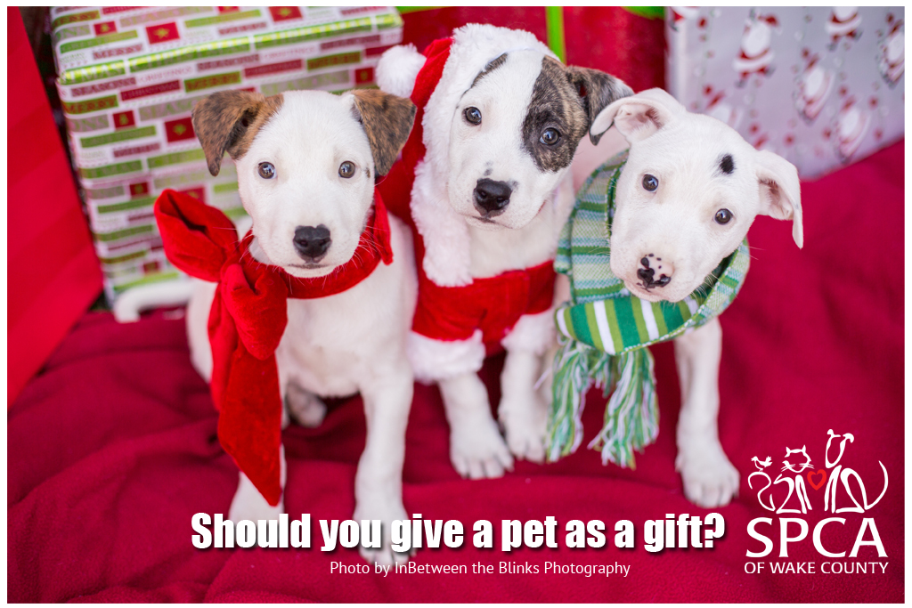 Should Santa Put a Pet Under the Tree? | SPCA of Wake County NC